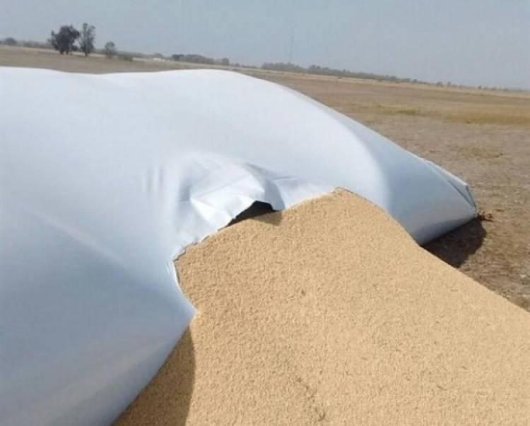 Robaron soja de un silo bolsa