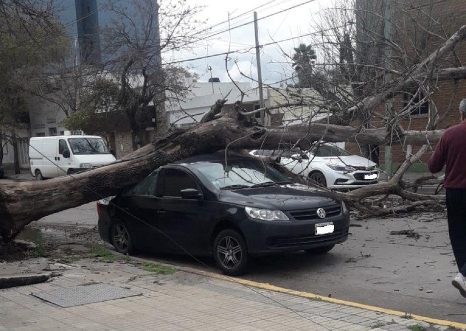 El viento desprendió un árbol y destruyó un auto en Villa María